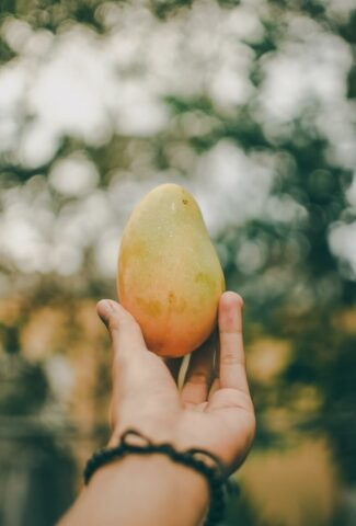 how to ripen mangoes tips